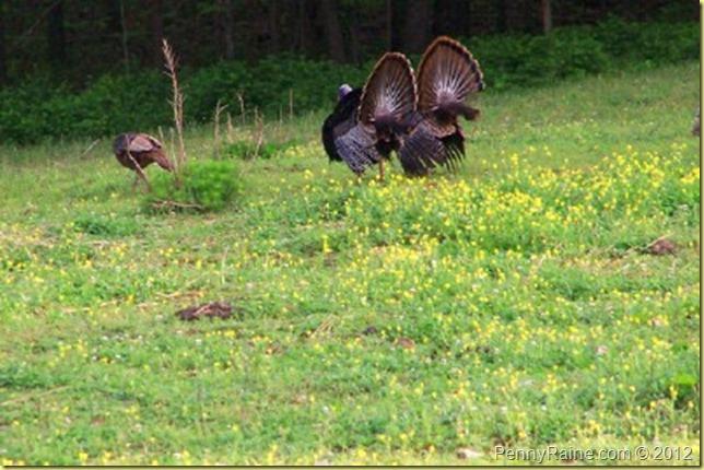 turkeypride
